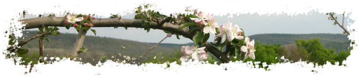 Eve's Cidery Rotating Header Image
