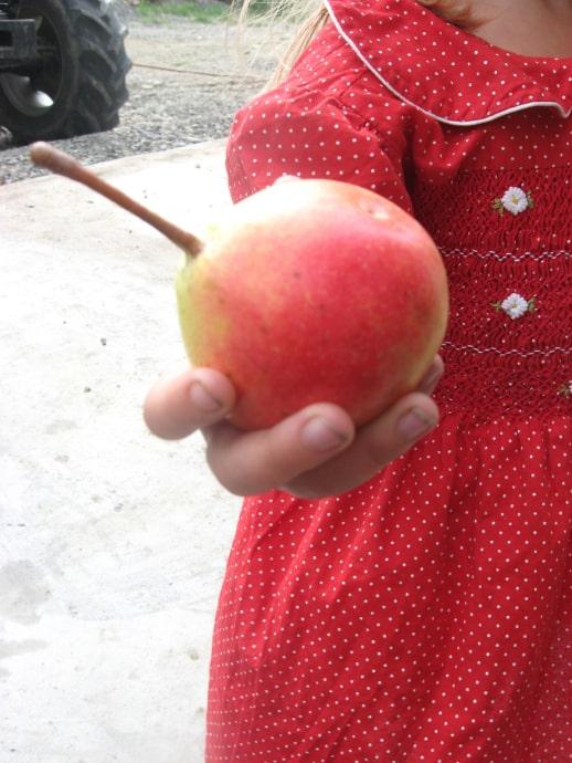 Brandy Pear