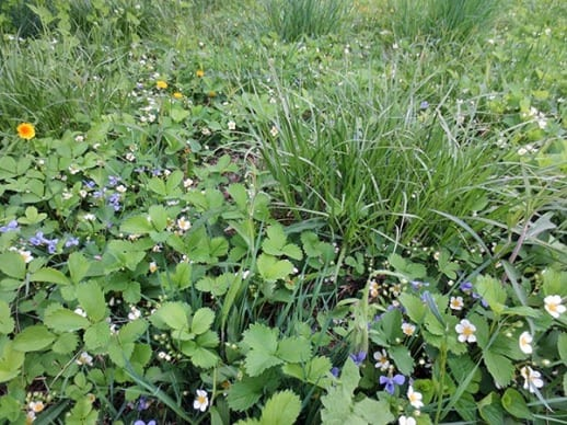 Mixed Species Ground Cover