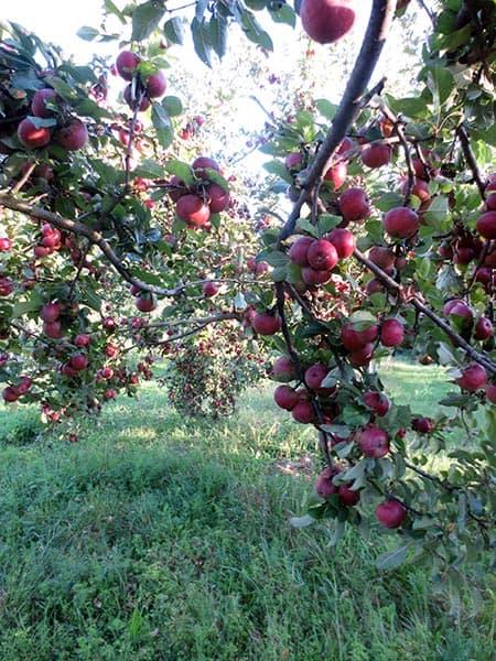 Van Etten Orchard