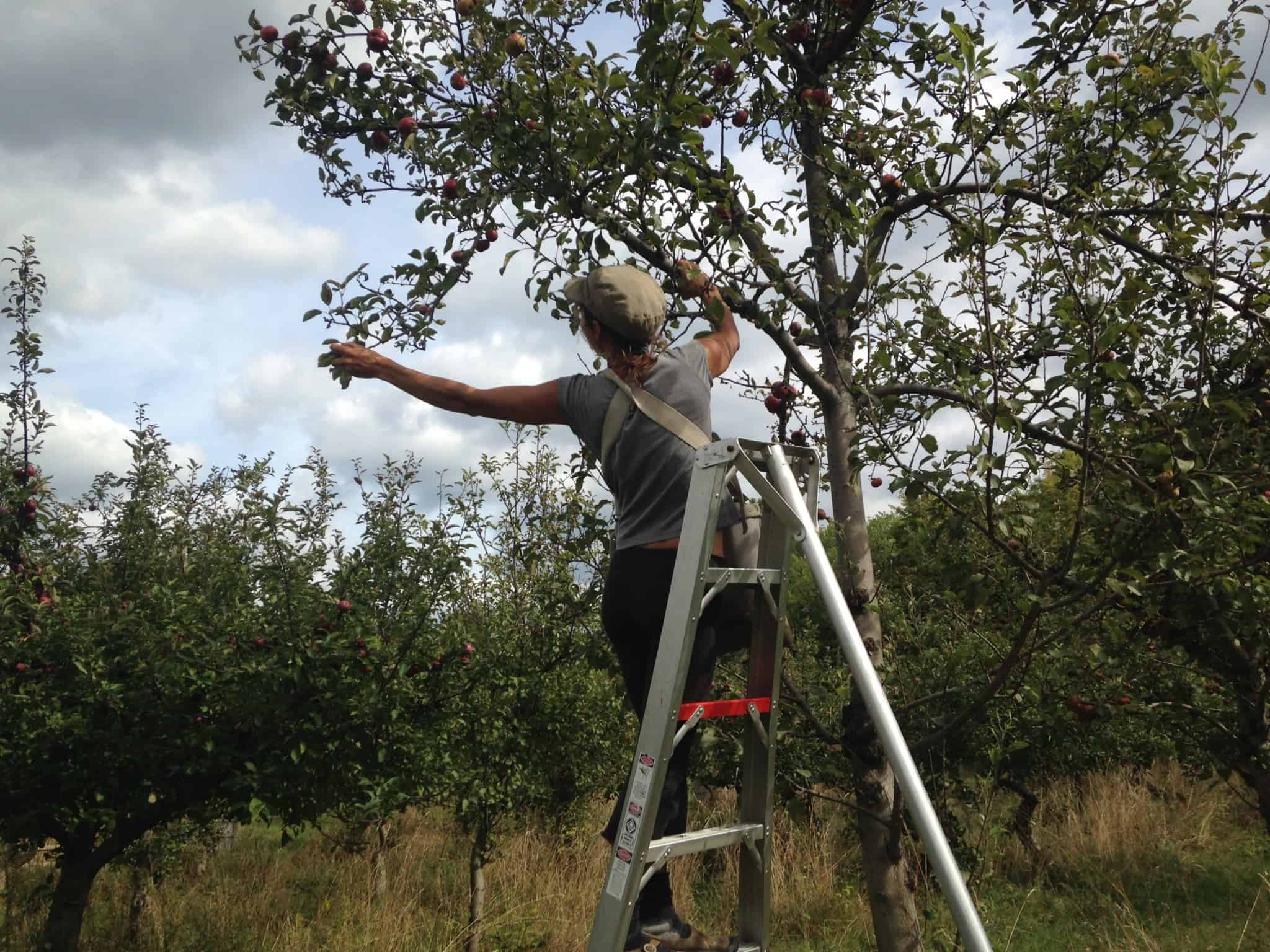picking-celia-on-a-ladder