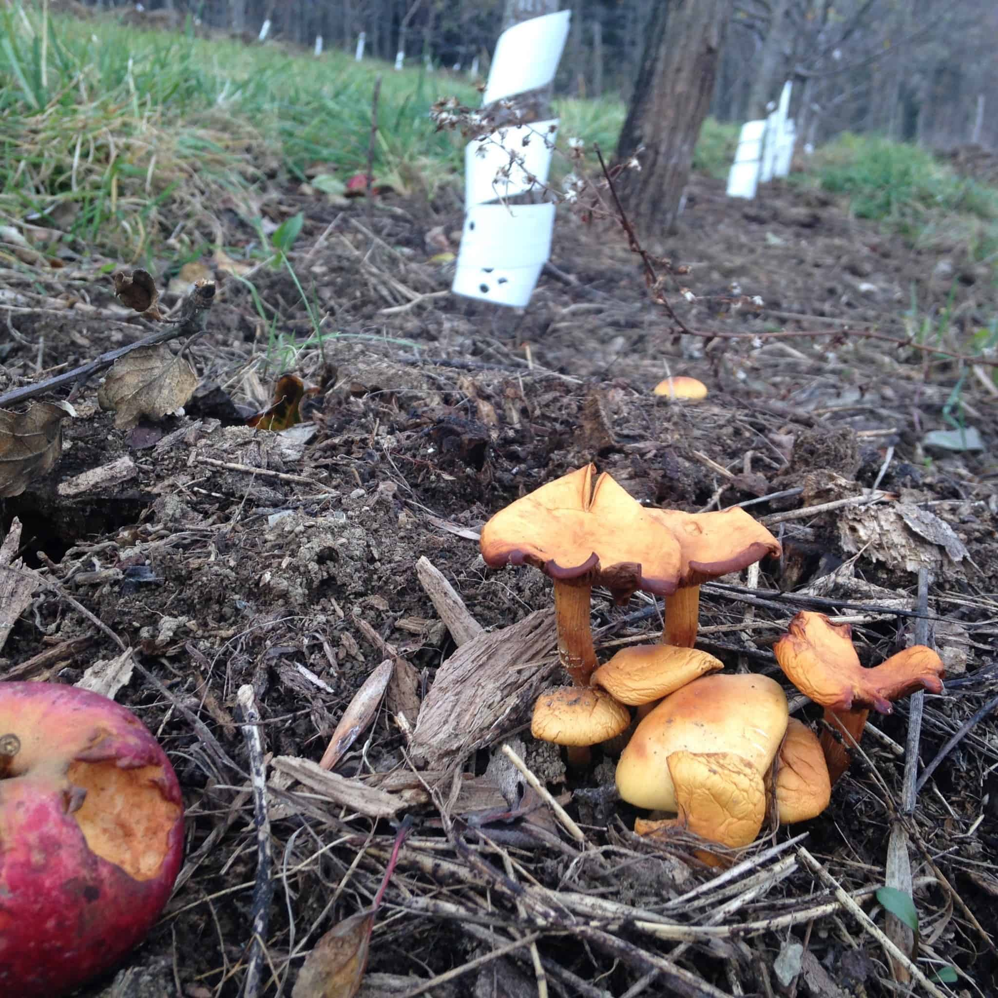 place-orchard-floor-with-mushrooms