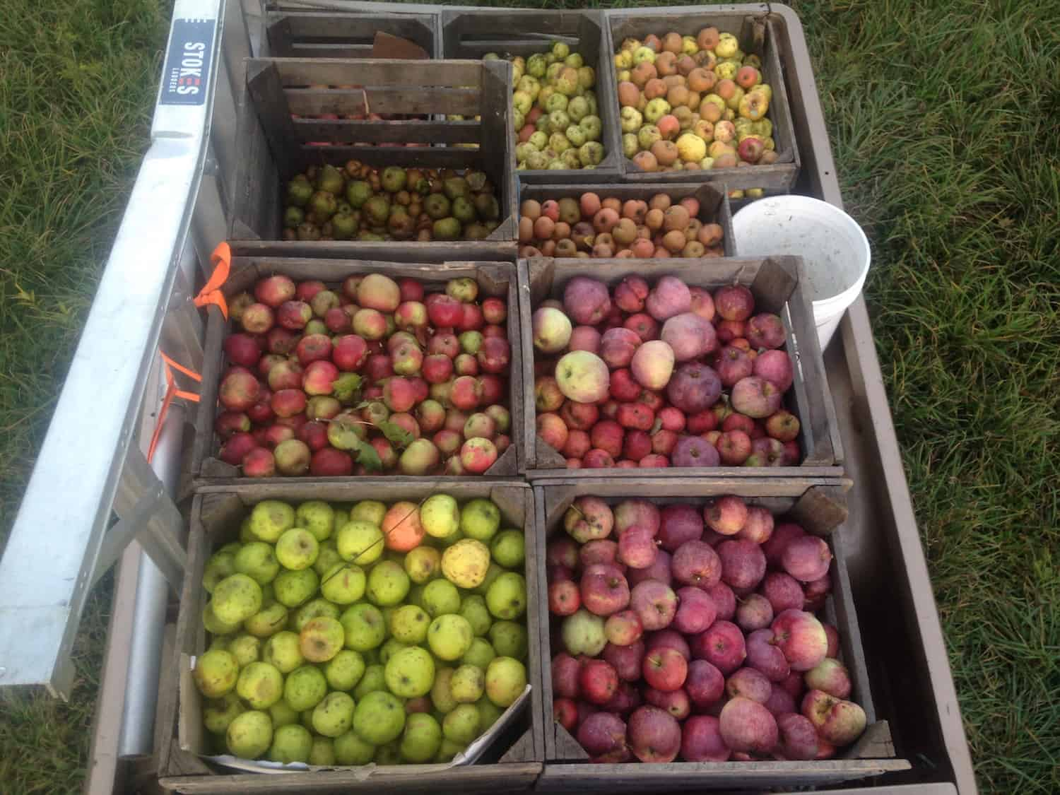 picking-wild-apples-in-the-truck-at-eves-cidery