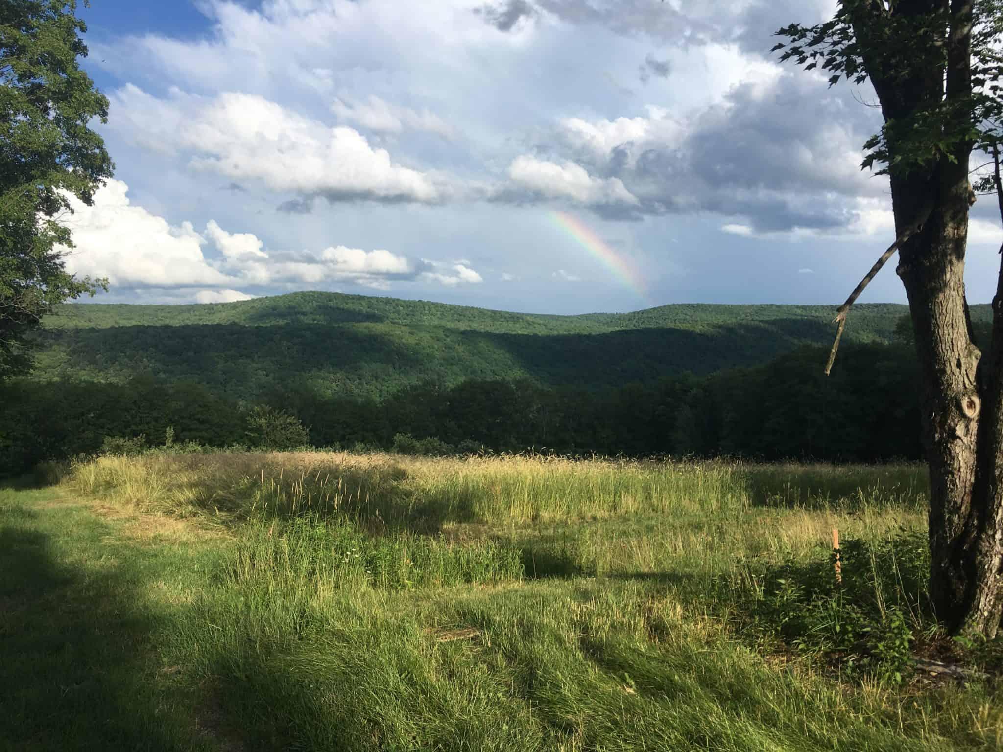 2017 was a season of rainbows.