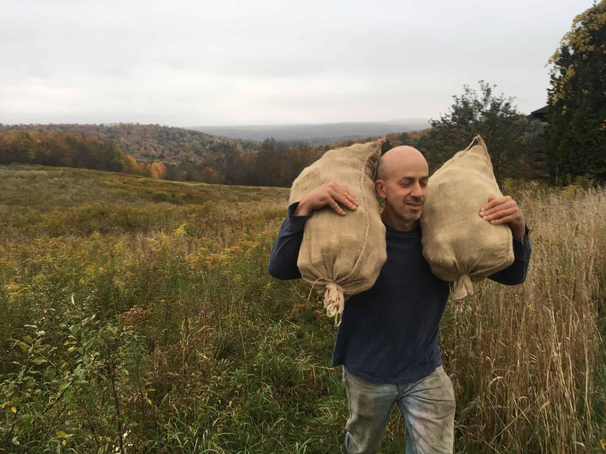 Hauling Wild Pears