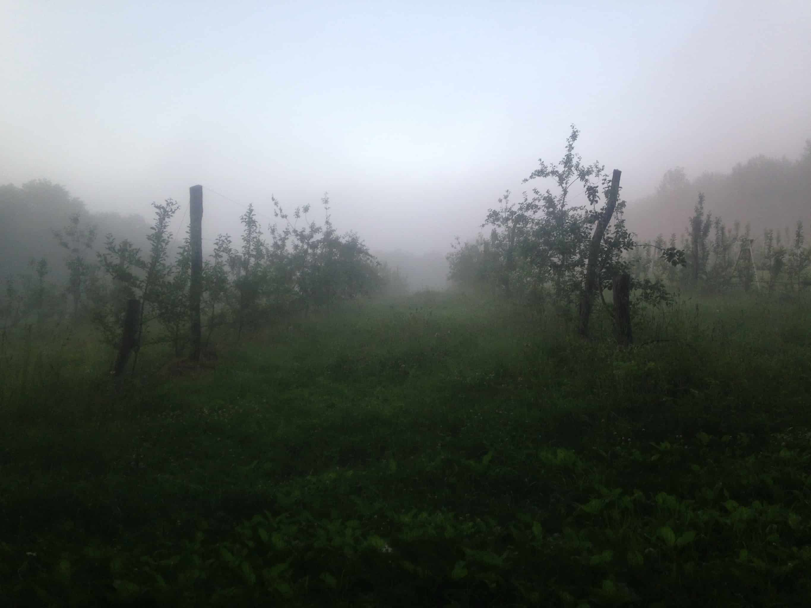 north orchard mist rows hill