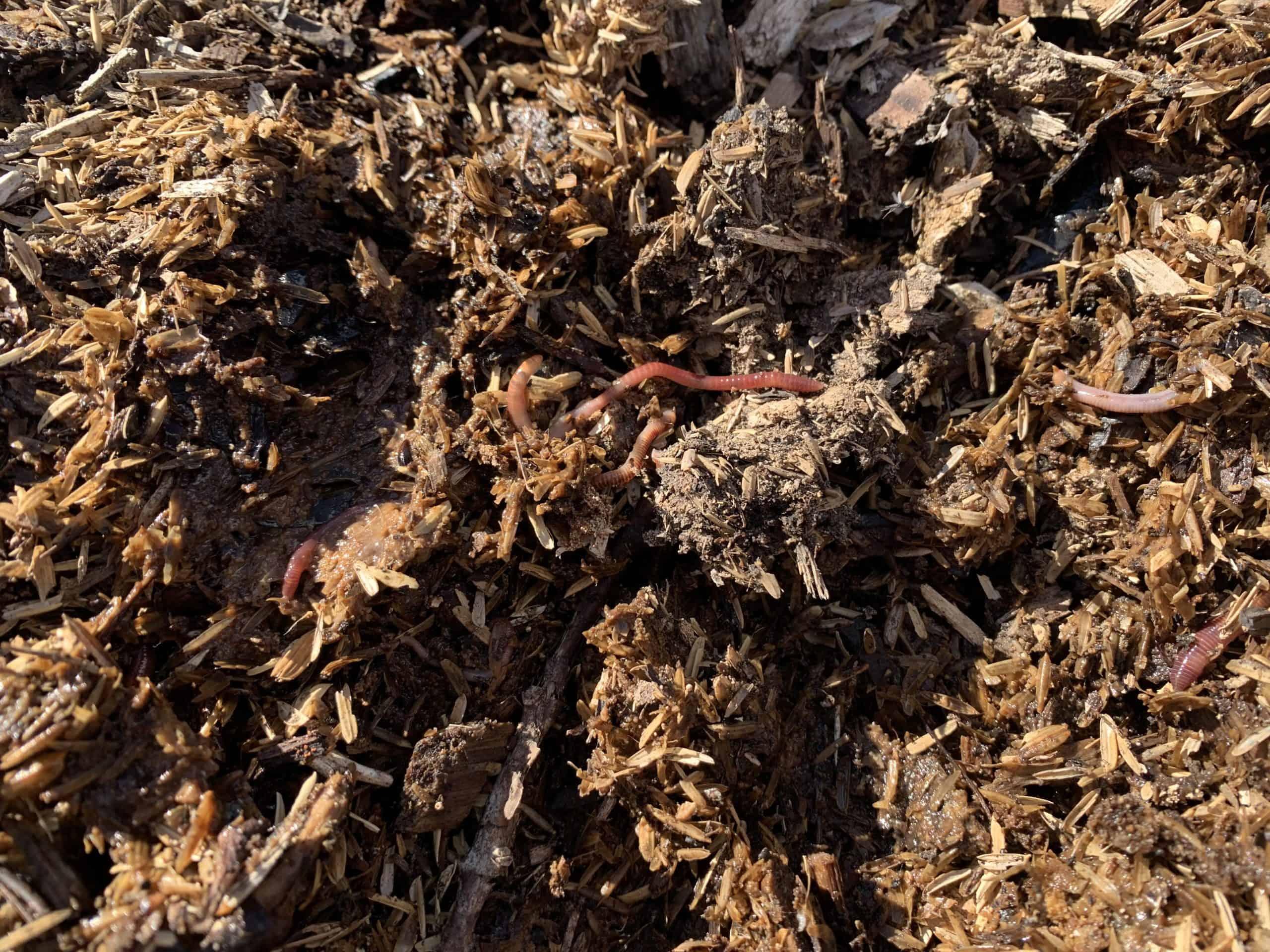 living compost