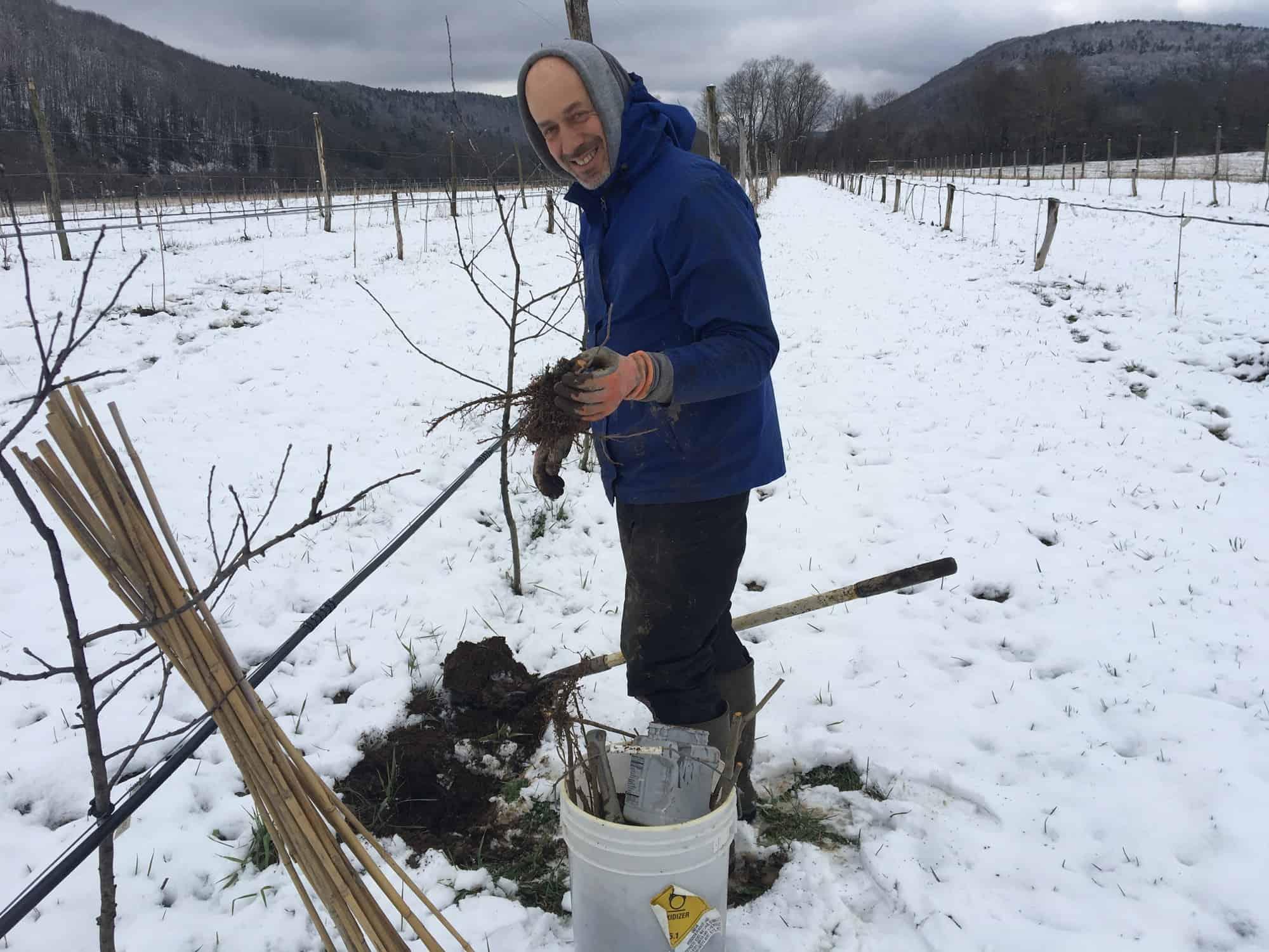 Ezra planting rootstocks