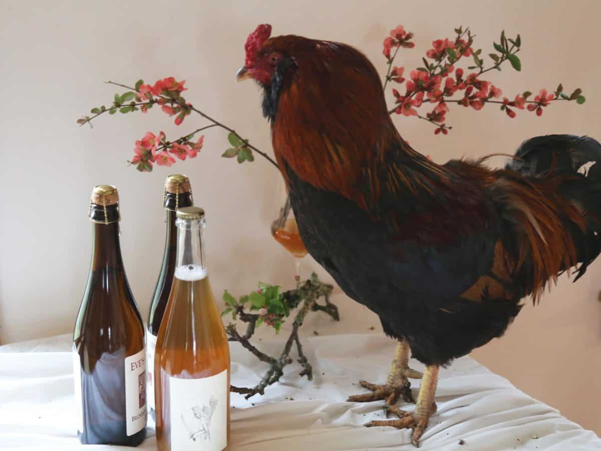 Rooster and Cider